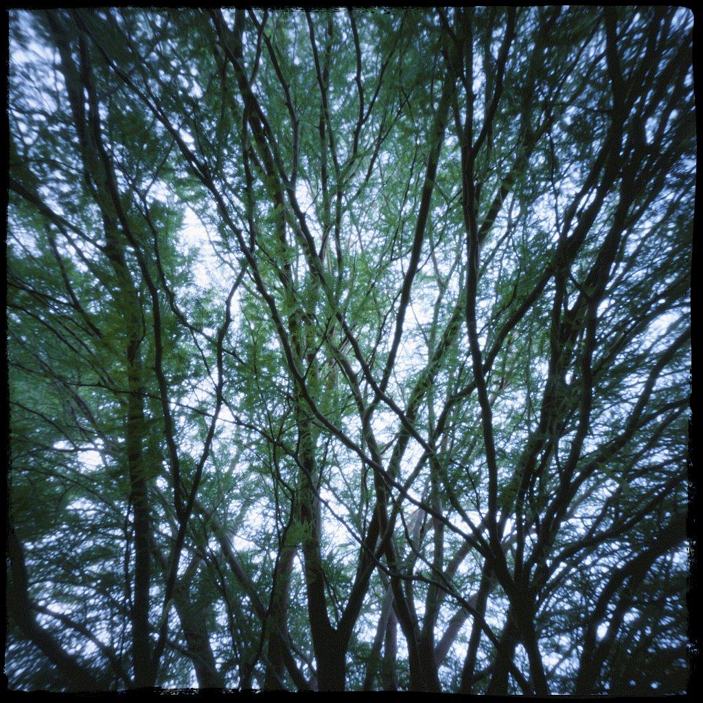 pinhole 1, trees