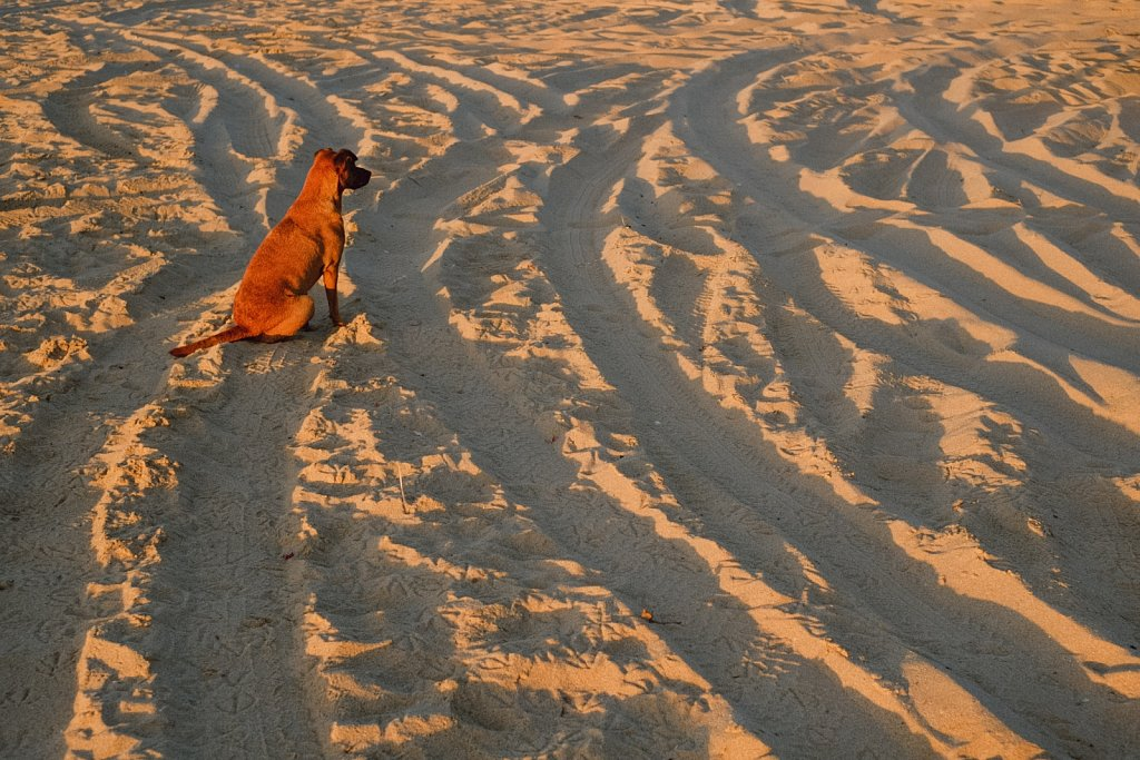 Dog on the right track